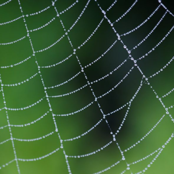 dew-on-a-spider-web